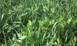 Λειμώνια φυτά