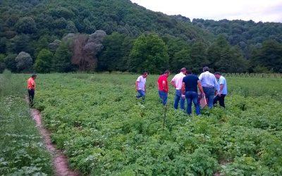 Field trip με αντιπροσώπους της DANESPO σε καλλιέργεια πατάτας στη Δράμα